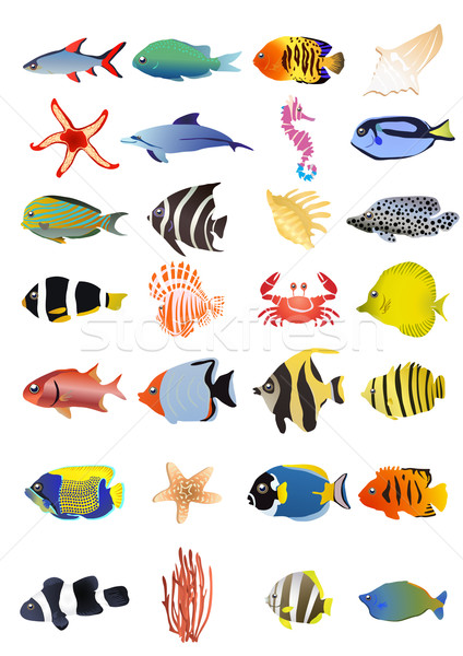 marine animals Stock photo © pressmaster