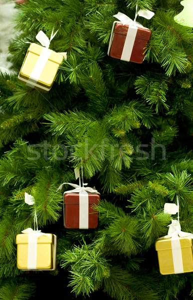 Magic fir tree Stock photo © pressmaster