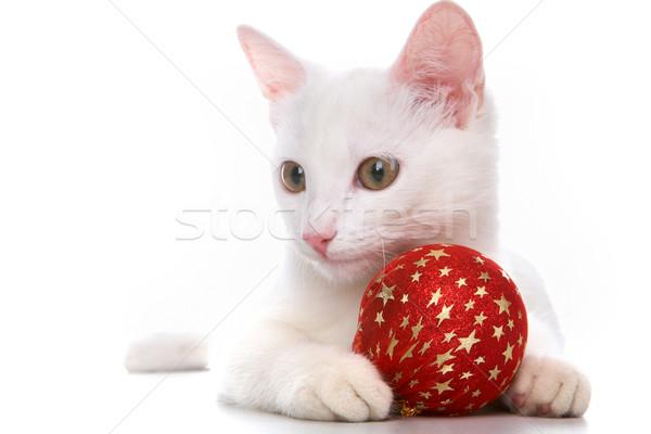 Katze rot Ball Bild weiß Spielzeug Stock foto © pressmaster