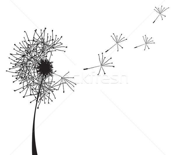 Stock photo: dandelion outline