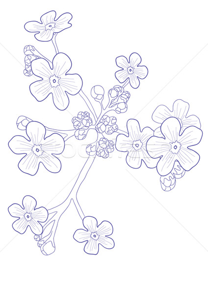 красивой диких цветов мне весны аннотация фон Сток-фото © pressmaster
