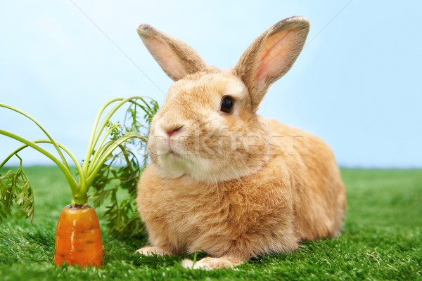 Adorable pet Stock photo © pressmaster