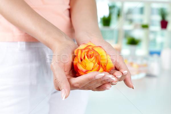 Prego estância termal feminino rosebud mãos Foto stock © pressmaster