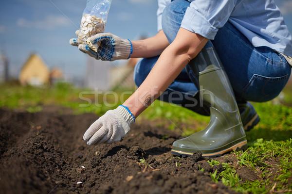 Work in the garden Stock photo © pressmaster