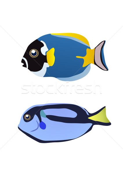 two tropical fishes  Stock photo © pressmaster