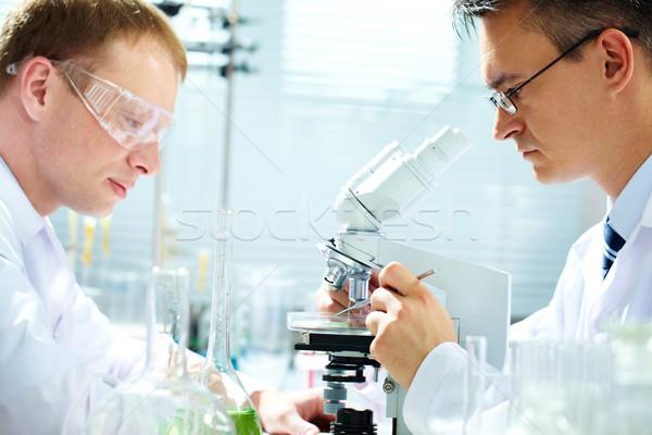 Researching Stock photo © pressmaster