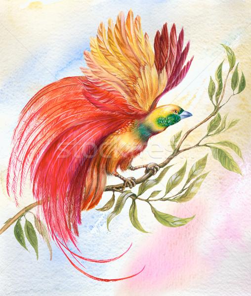 Pássaro paraíso pintura brilhante colorido incomum Foto stock © pressmaster