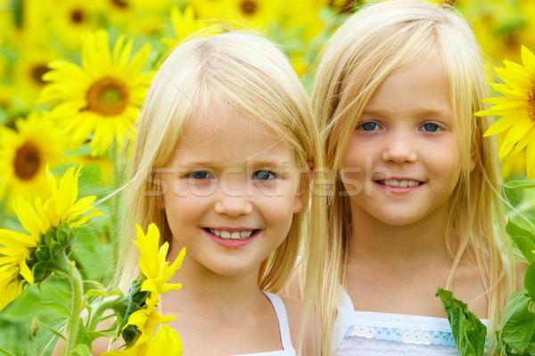 In sunflowers Stock photo © pressmaster