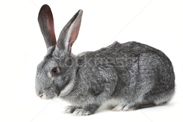 Cute mammal Stock photo © pressmaster