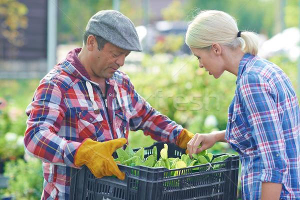 Friss palánták női kertész néz zöld Stock fotó © pressmaster