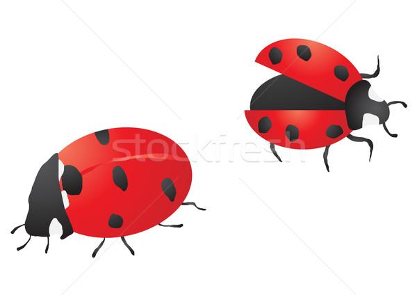 ladybugs Stock photo © pressmaster