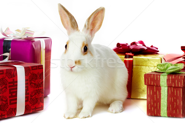 Rabbit and gifts Stock photo © pressmaster