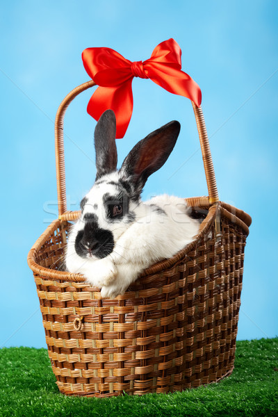 Rabbit in basket Stock photo © pressmaster