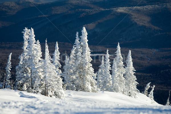 Winter scene Stock photo © pressmaster