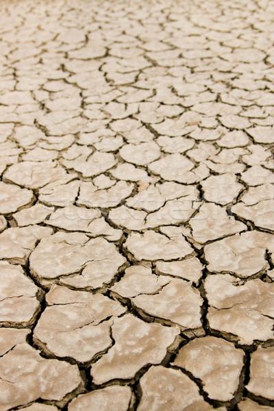 Dry ground Stock photo © pressmaster