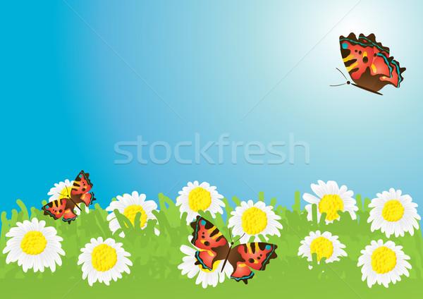 красивой бабочки ромашка луговой небе Сток-фото © pressmaster