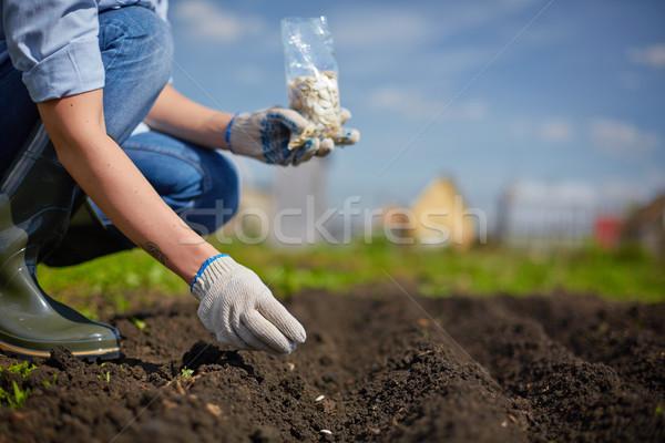 Aussaat Saatgut Bild weiblichen Landwirt Garten Stock foto © pressmaster