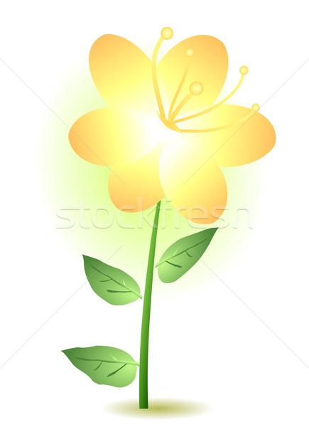 yellow lily  Stock photo © pressmaster