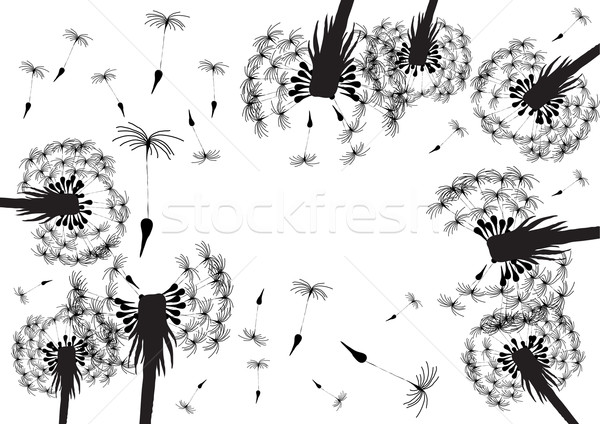 dandelion silhouettes  Stock photo © pressmaster