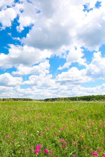 Tisztás fotó fényes felhős égbolt gyönyörű Stock fotó © pressmaster
