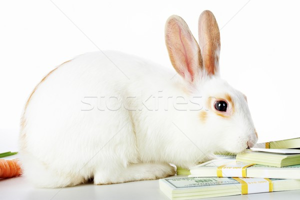 Rabbit and dollars Stock photo © pressmaster
