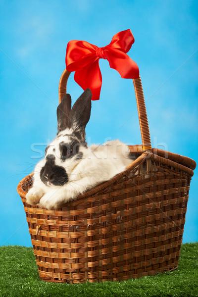 Rabbit in basket Stock photo © pressmaster