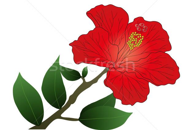 Red hibiscus Stock photo © pressmaster