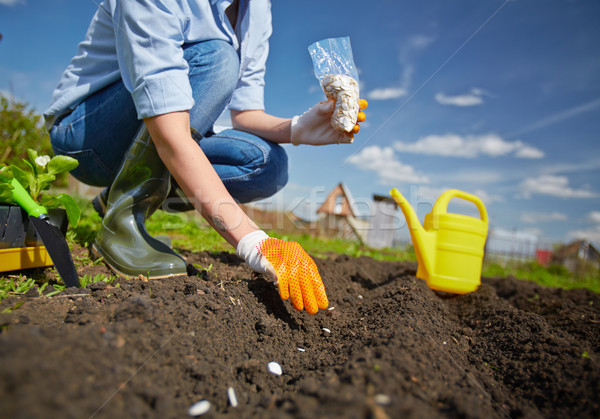 Vrouwelijke tuin afbeelding landbouwer zaaien zaad Stockfoto © pressmaster