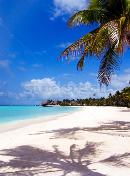 Foto stock: Luxuoso · terra · ver · exótico · paisagem · palms