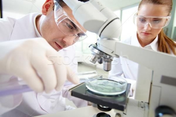 Laboratory research Stock photo © pressmaster