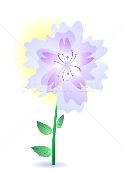 purple summer flower Stock photo © pressmaster