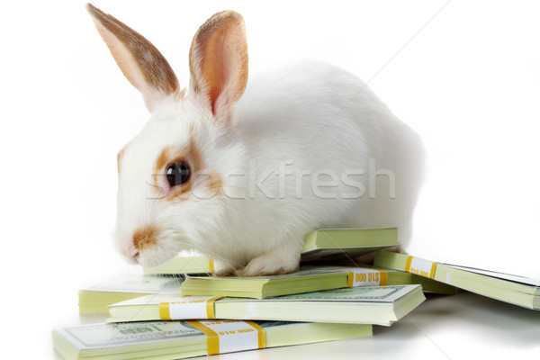 Rabbit with money Stock photo © pressmaster