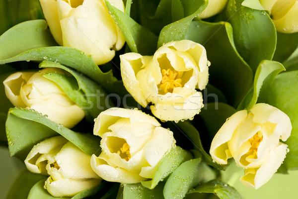 Yellow tulips Stock photo © pressmaster