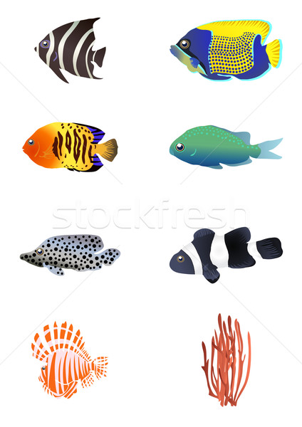 exotic fishes  Stock photo © pressmaster