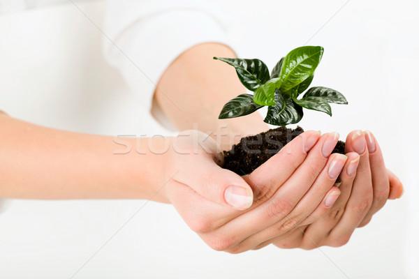 Green plant Stock photo © pressmaster