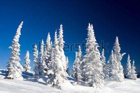 Fagyos díszlet fotó csodálatos jelenet kék ég Stock fotó © pressmaster