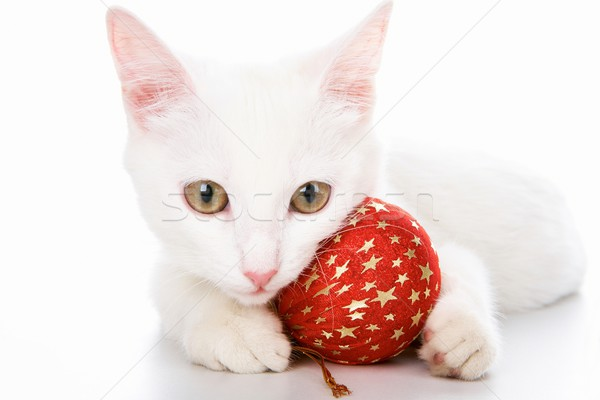 Cat with red toy Stock photo © pressmaster