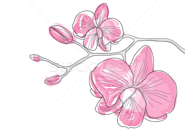 Pink orchid Stock photo © pressmaster