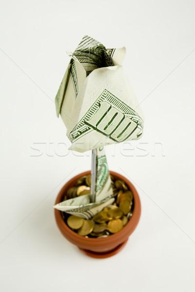денежный цветок долларов белый бизнеса фон Сток-фото © pressmaster