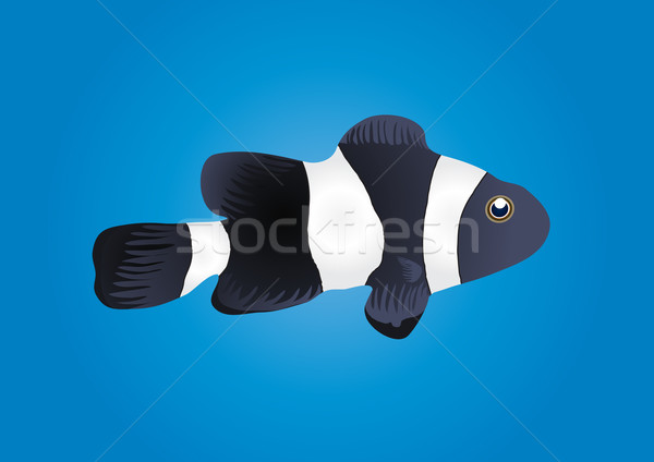 clownfish Stock photo © pressmaster