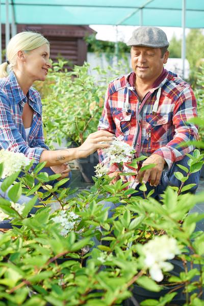 Two gardeners Stock photo © pressmaster
