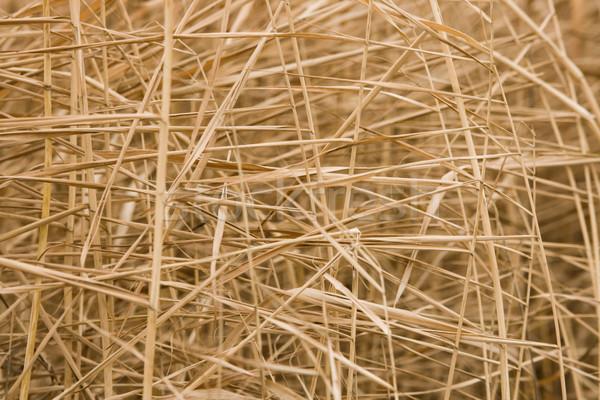Dry grass Stock photo © pressmaster