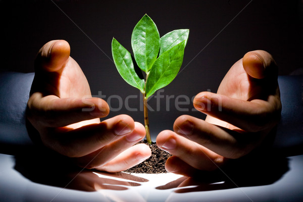 Hands with plant  Stock photo © pressmaster