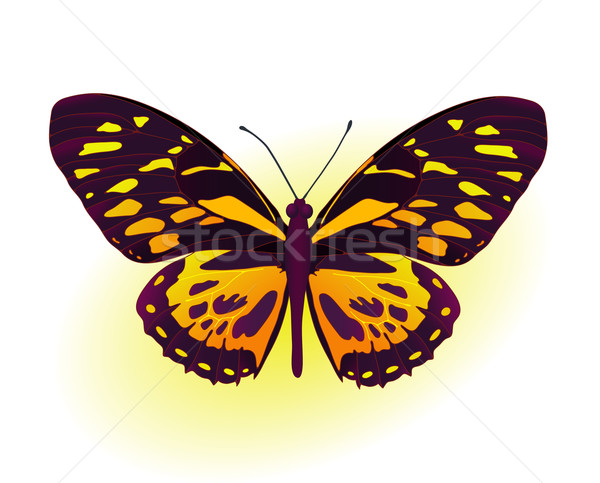 black and yellow butterfly Stock photo © pressmaster