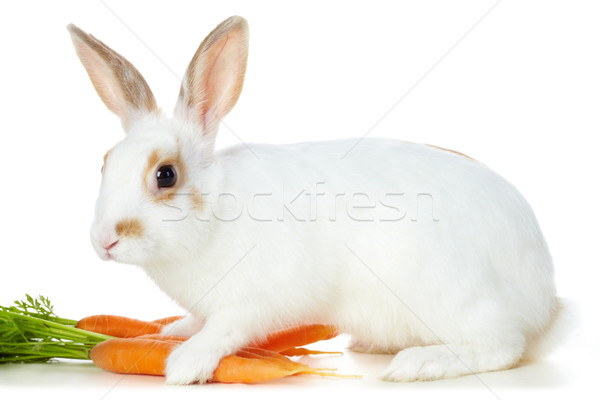 Rabbit with carrots Stock photo © pressmaster