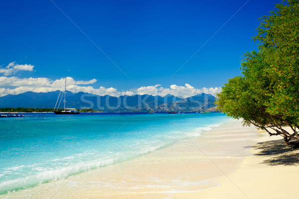 Strand zomertijd water boom wolken landschap Stockfoto © prg0383
