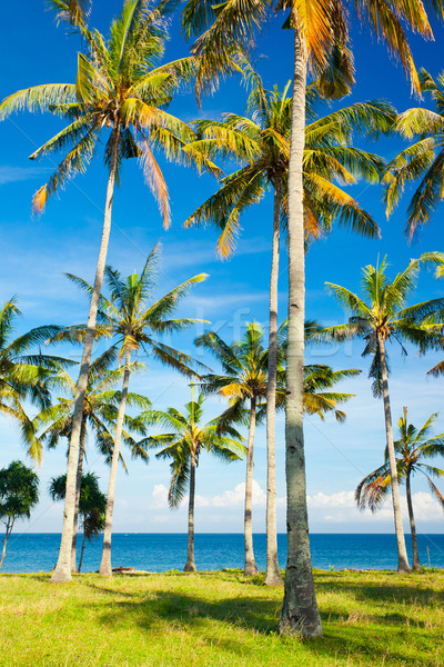 Spiaggia palme ora legale acqua nubi panorama Foto d'archivio © prg0383