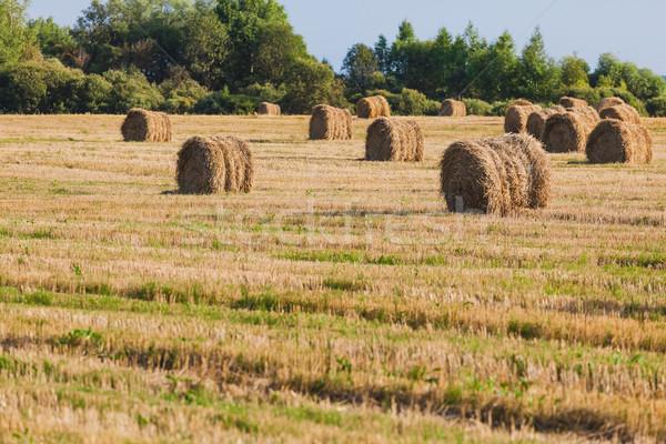 Saman tahıl alan hasat doku manzara Stok fotoğraf © prg0383