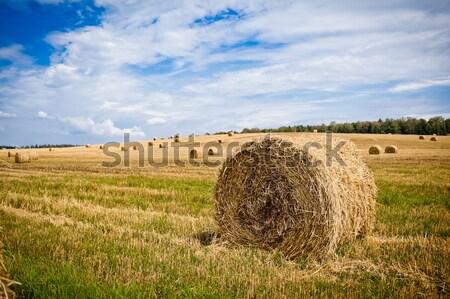 соломы зерна области текстуры пейзаж Сток-фото © prg0383