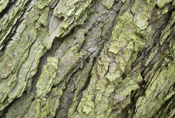 Absztrakt ugatás részlet full frame fa természet Stock fotó © prill
